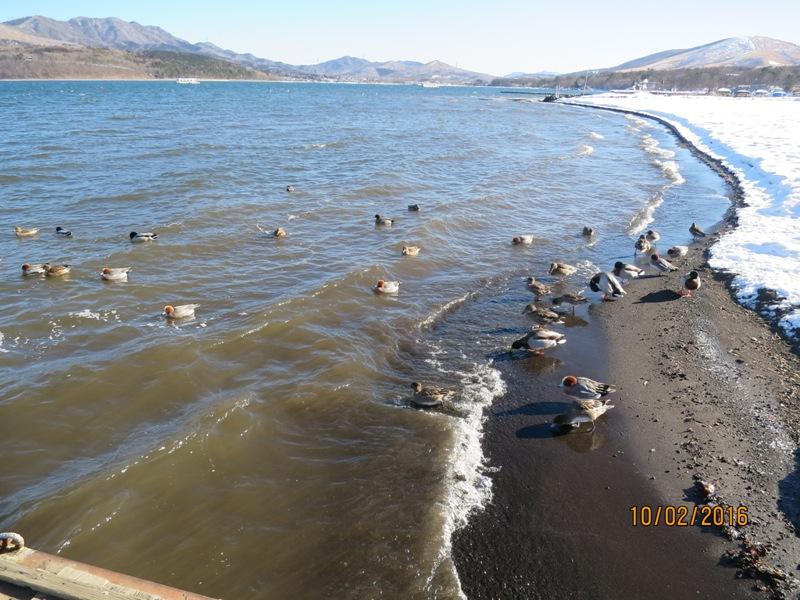 Lake Yamanako Swan pier