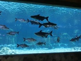 Mekong River fish exhibit4