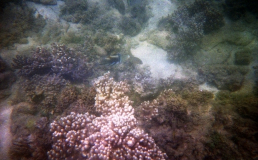 Arlington reefs02