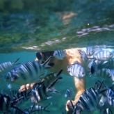 Belle Mare Snorkel02