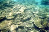 Belle Mare Snorkel05