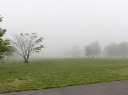 Misty morning in Karuizawa1