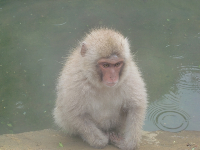 Spa with Monkeys?