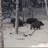 Ranua Zoo5