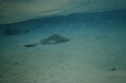 Stingray city18