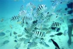 Undersea Walk27