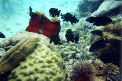 Undersea Walk28