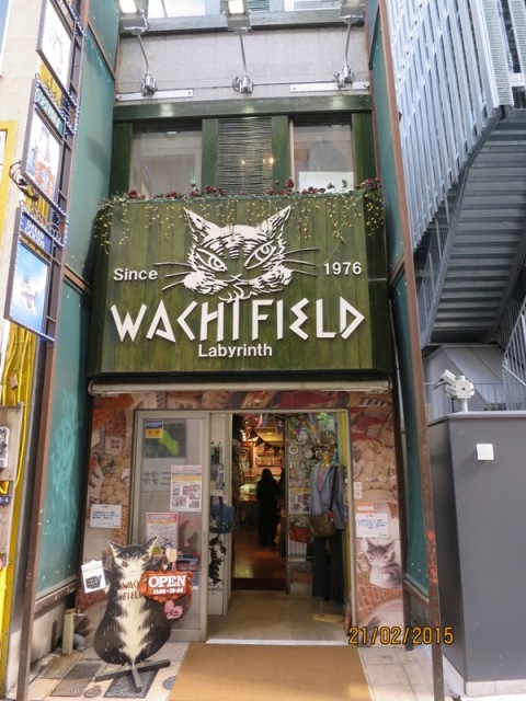 Wakefield cat cafe