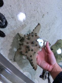 Churaumi - Coral reef2