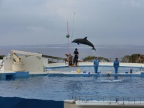 Churaumi - Dolphin show15
