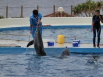 Churaumi - Dolphin show9