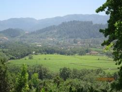 Rombauer winery4