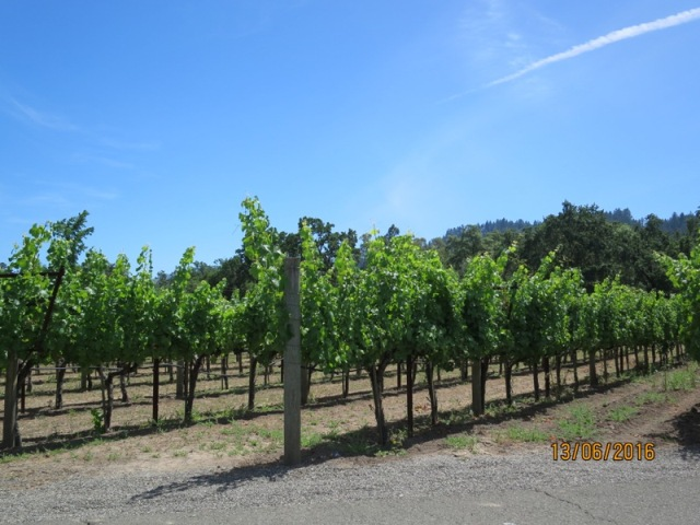 Duckhorn Winery2