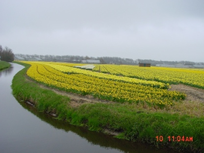 Flower Fields03