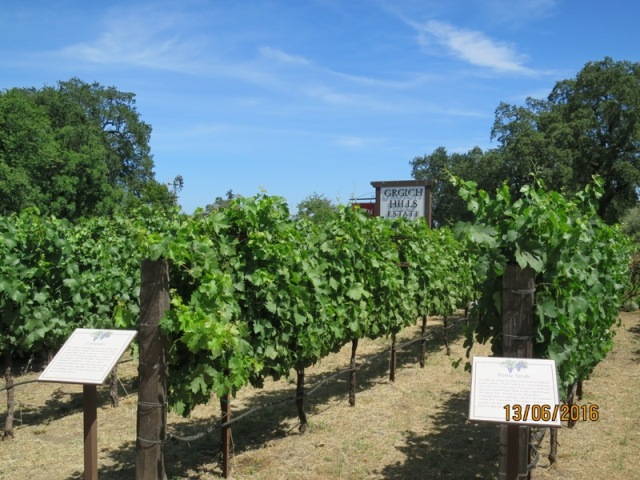 Grgich estate winery2