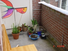 Home March 2005-1