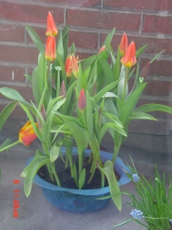 House Plants08