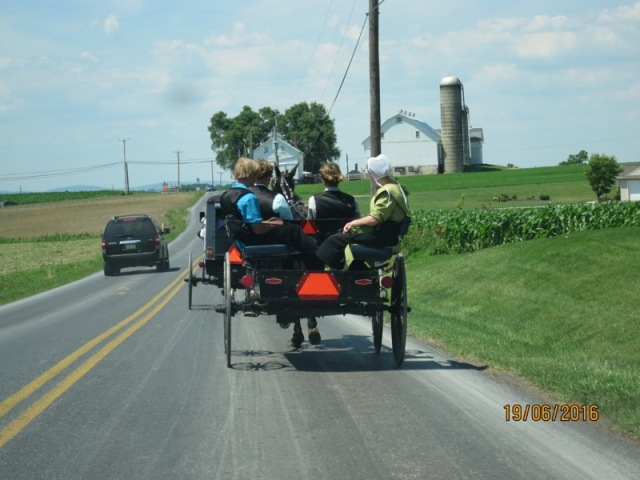 Local Amish in Buggies12