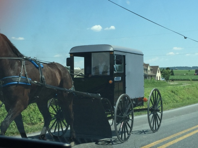 Local Amish in Buggies29