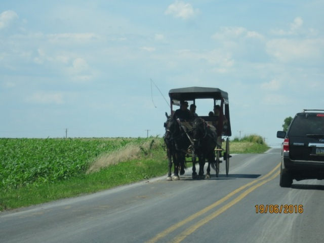 Local Amish in Buggies5