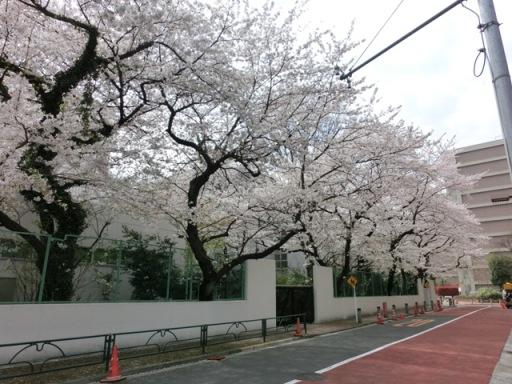 Minami Aoyama area17