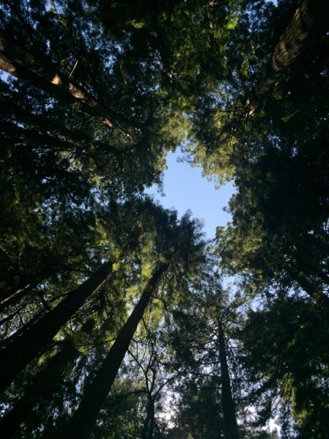 Muir Woods66