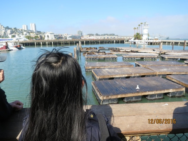 Pier 39 seal colony1
