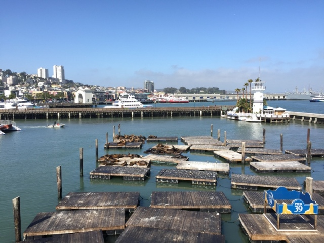 Pier 39 seal colony20