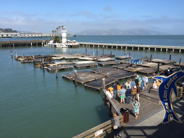 Pier 39 seal colony23