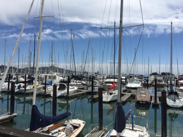 Sausalito Pelican harbor11