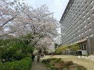 Shinagawa Prince Sakura garden16
