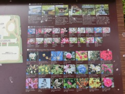 Shinagawa Prince Sakura garden17