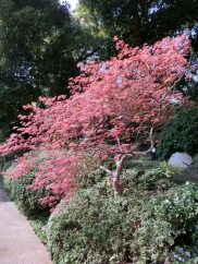 Shinagawa Prince Sakura garden41