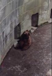 Bear Pit1