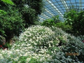 Flower Dome17