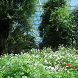 Flower Dome18