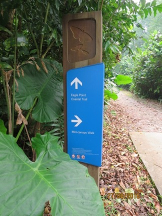Mid Canopy walk1