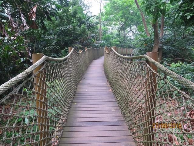 Mid Canopy walk3