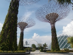The trees and domes