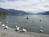 Walk to Lake Geneva Cruise7