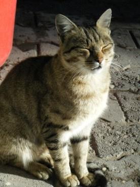 Kaymakli cat2