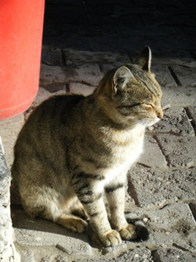 Kaymakli cat3