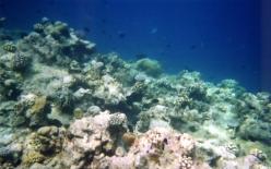 Snorkel Safari25