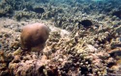 Vabbinfaru House reefs08