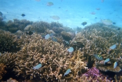 Vabbinfaru House reefs09