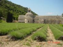 abbaye-senanque05