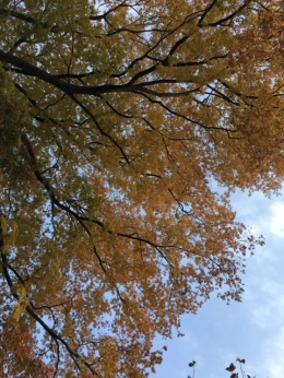 Beautiful Gold autumn