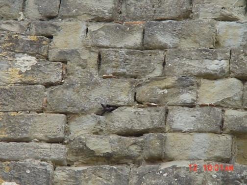 carcassonne-inner-ramparts13