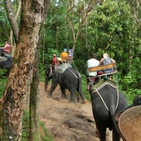 elephant-ride25
