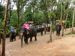 elephant-ride3